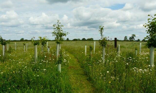 Paths through Woodland Burial Area
