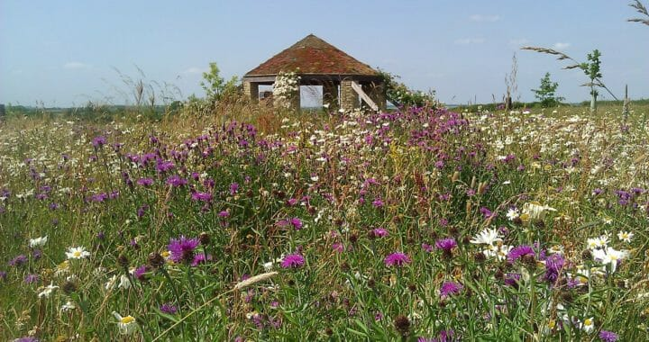 Meadow Turning Purple