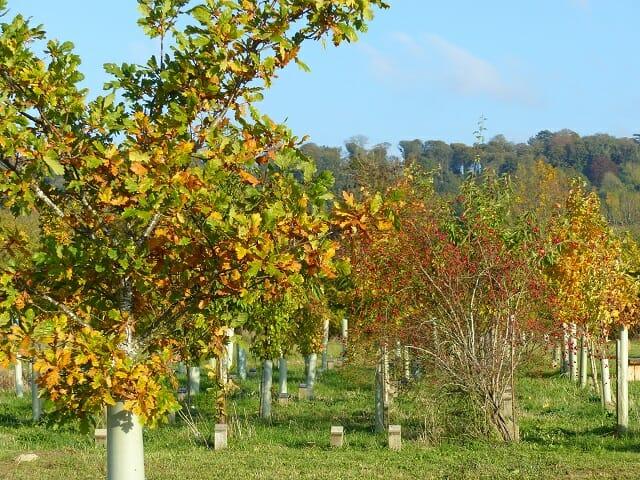 Growing Memorial Trees