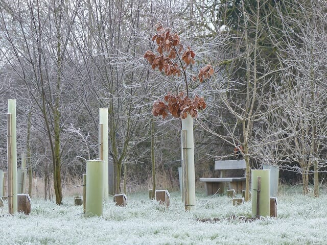Frosty Woodland Burial Area