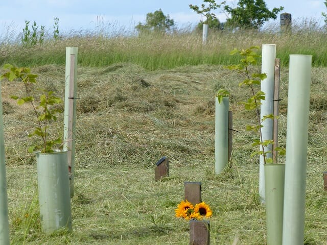 The Hay Cut, with Sunflowers by a Memorial Tree