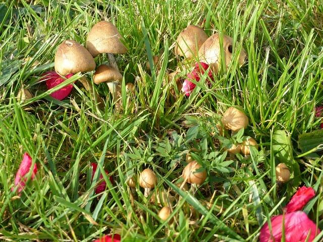 Autumn Mushrooms and Rose Petals