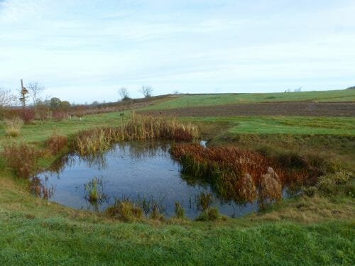 The Wildlife Pond - before work began