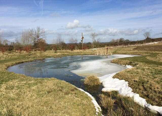 Melting Snow on the Wildlife Pond