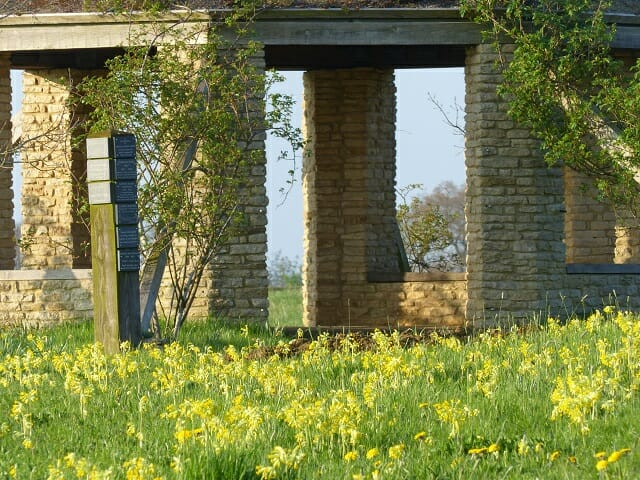 Cowslips near the Roundhouse