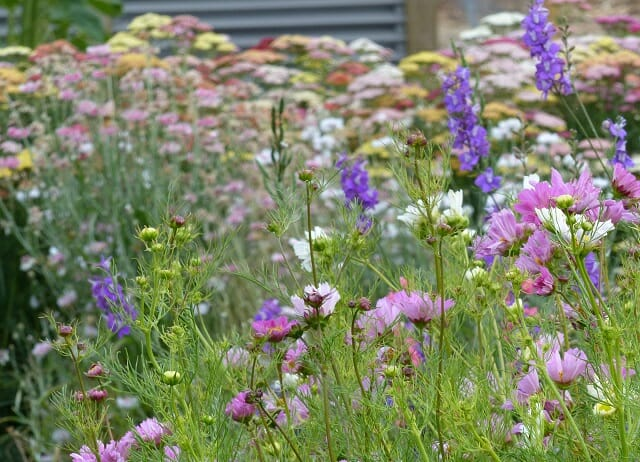 Growing Beds at Hope and Glory Flowers