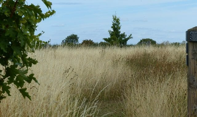 Wildflowers and Grasses in Seed