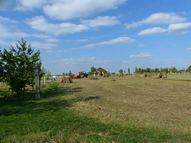 Wildflower Meadow Mown and Baled
