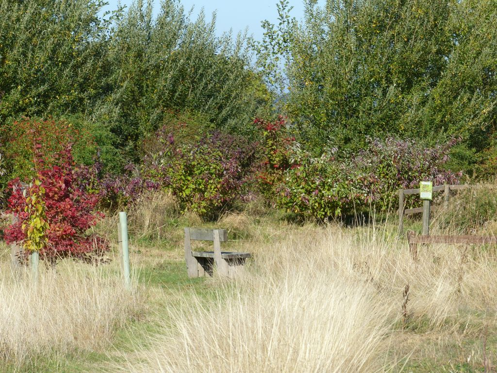 Dry Grasses and Autumn Colour at Sun Rising Natural Burial Ground and Nature Reserve