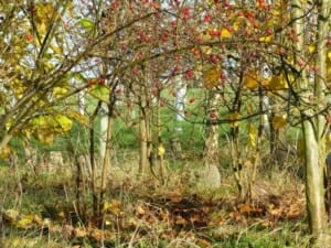 Leaf Fall in Woodland Burial Area at Sun Rising Natural Burial Ground and Nature Reserve