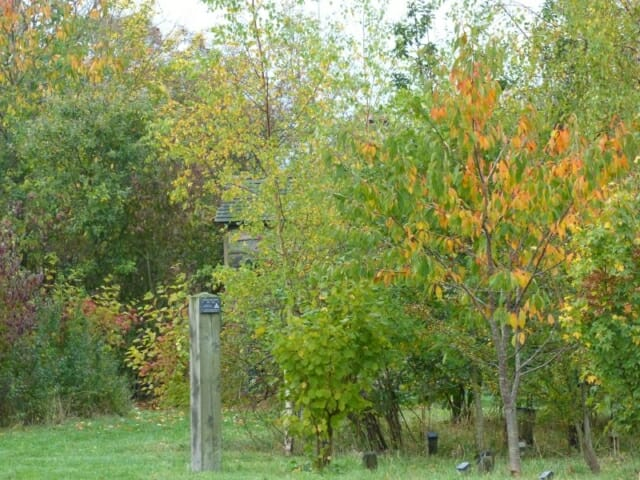 Wild Cherry and other Autumn Colour at Sun Rising Natural Burial Ground and Nature Reserve