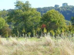 Woodland Burial  at Sun Rising Natural Burial Ground and Nature Reserve
