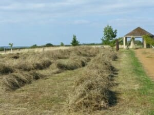 Betty's Meadow Cut and Rowed at Sun Rising Natural Burial Ground and Nature Reserve