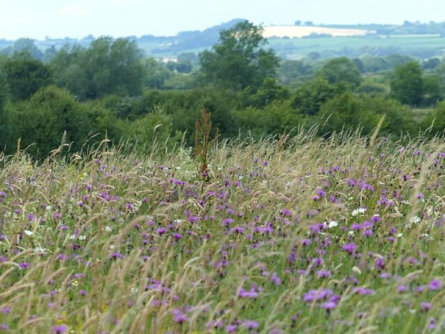 View to Ilmington Hill over Wildflower Meadow at Sun Rising Natural Burial Ground and Nature Reserve