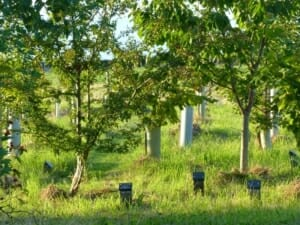 Young Memorial Trees and Woodland Graves in Oliver's Wood at Sun Rising Natural Burial Ground and Nature Reserve