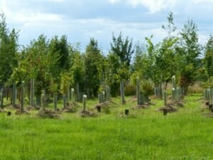 Seth's Wood with Memorial Trees Mulched at Sun Rising Natural Burial Ground and Nature Reserve