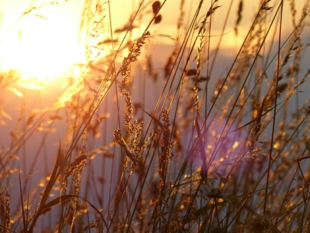 Evening Sunlight in Tall Grasses at Sun Rising Natural Burial Ground and Nature Reserve
