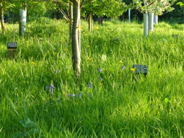 English Bluebells in Peter's Wood at Sun Rising Natural Burial Ground and Nature Reserve