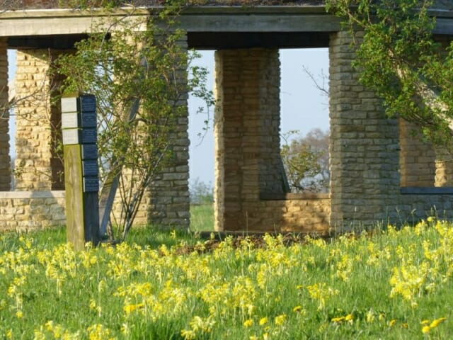 Cowslips in the Wildflower Meadow at Sun Rising Natural Burial Ground and Nature Reserve