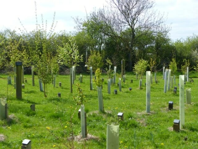 Young Memorial Trees coming into Leaf in Peter's Wood at Sun Rising Natural Burial Ground and Nature Reserve