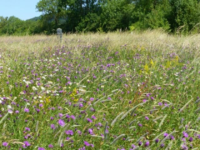 Wildflower Meadows at Sun Rising Natural Burial Ground and Nature Reserve