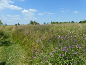 Betty's Wildflower Meadow at Sun Rising Natural Burial Ground and Nature Reserve