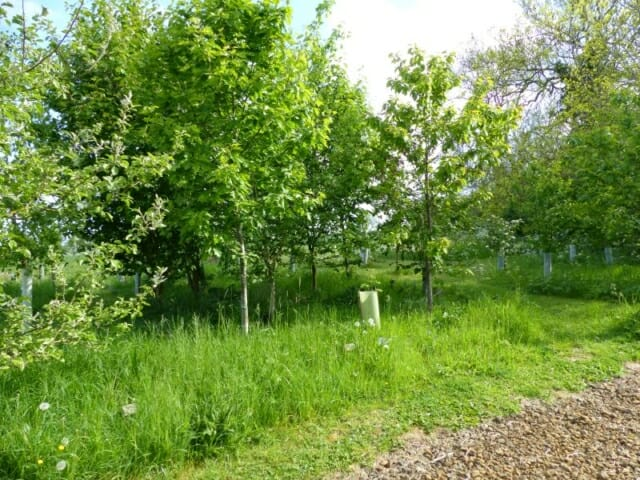 Edge of Liliana's Wood at Sun Rising Natural Burial Ground and Nature Reserve