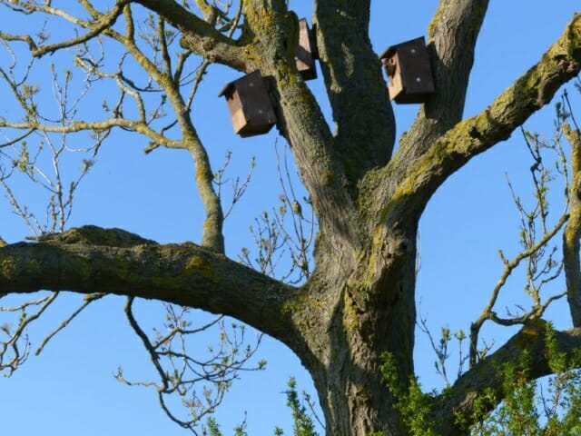 Tree Sparrow Nestboxes at Sun Rising Natural Burial Ground and Nature Reserve