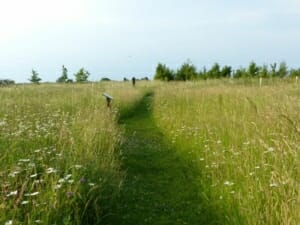 Path through Wildflower Meadow at Sun Rising Natural Burial Ground and Nature Reserve