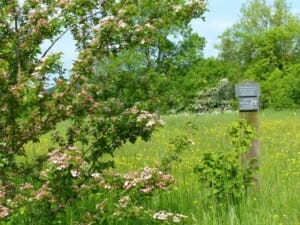 Common Hawthorn turning Pink and Slate Memorial Plaques at Sun Rising Natural Burial Ground and Nature Reserve
