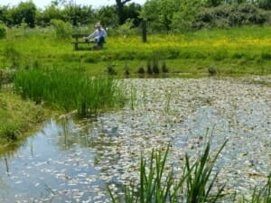 Wildlife Pond at Sun Rising Natural Burial Ground and Nature Reserve