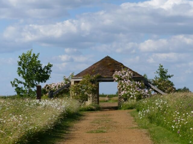 David Austin Roses in Bloom on the Roundhouse at Sun Rising Natural Burial Ground and Nature Reserve