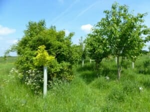 Growing Trees on Woodland Graves in Seth's Wood at Sun Rising Natural Burial Ground and Nature Reserve