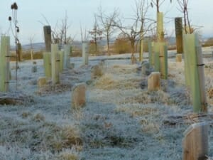 Frosty Woodland Burial Area at Sun Rising Natural Burial Ground and Nature Reserve
