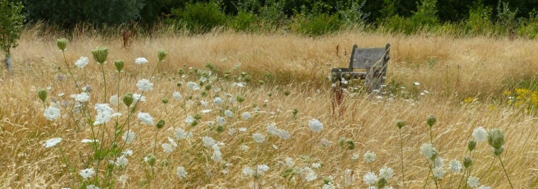 After a Cremation banner: meadow browning in later summer with memorial bench in the background.