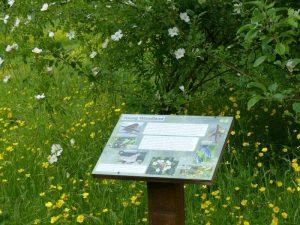 Habitat Interpretation Board at Sun Rising