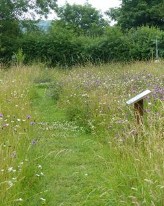 Path through the Meadow at Sun Rising10