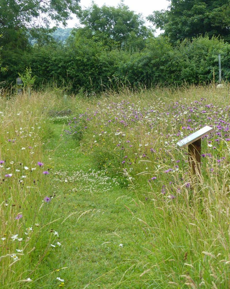 Path through the Meadow at Sun Rising10