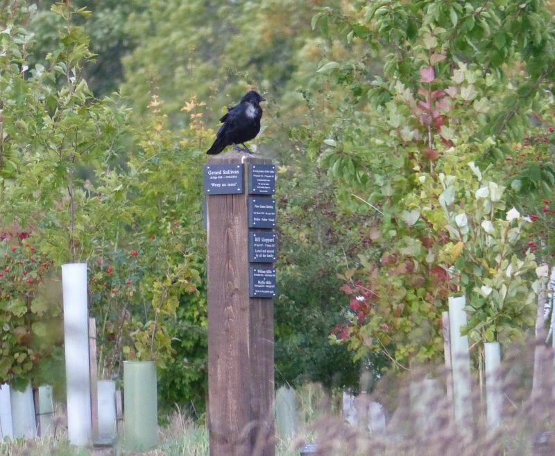 Memorial Post with Crow at Sun Rising