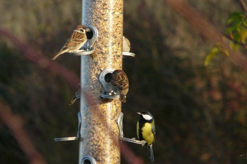 Birdfeeder at Sun Rising20
