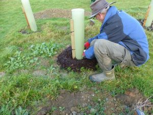 Planting of a Memorial Tree at Sun Rising