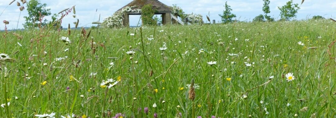 Sun Rising Natural Burial Ground banner: view of wildflower meadow with the roundhouse in the background.