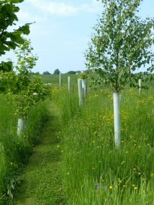 Path through a woodland burial area at Sun Rising.