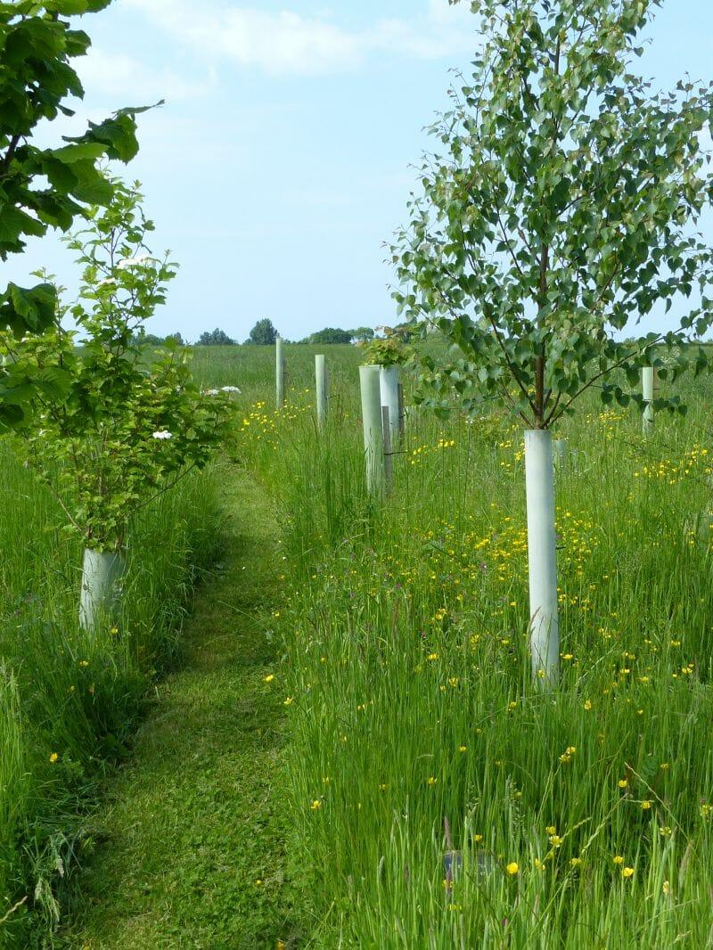 Path through Woodland Burial Area at Sun Rising