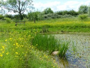 Wildlife Pond at Sun Rising