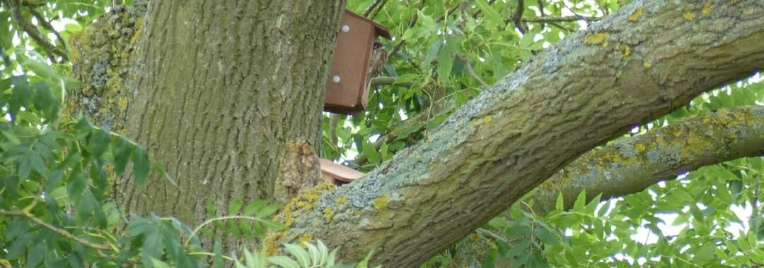 The Nature Reserve banner: tree sparrow perched at the entrance of nest box on an ash tree.