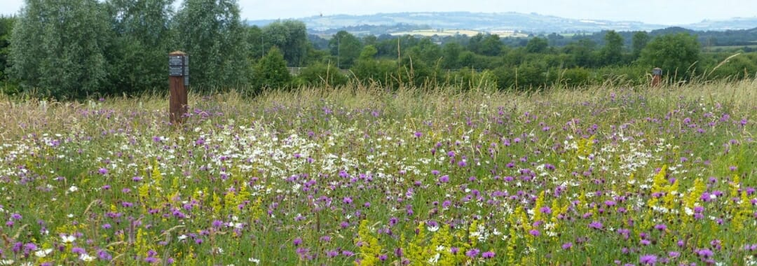 Planning Ahead banner: view over summer wildflower meadow across Warwickshire landscape to Cotswold hills in the distance.