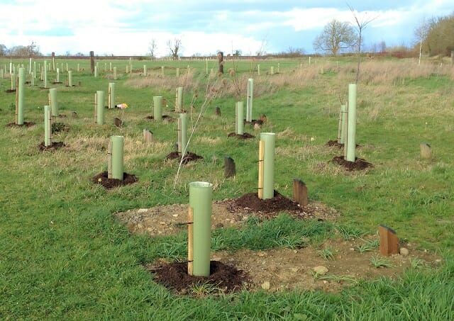 Saplings with their Composted Bark 'Doughnuts' at Sun Rising Natural Burial Ground and Nature Reserve