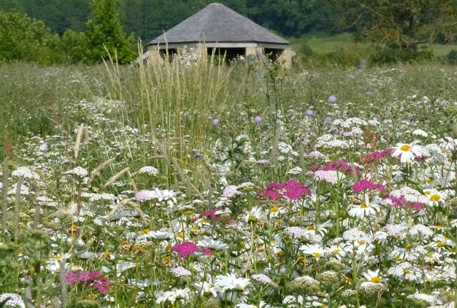 Wildflower Meadow at Sun Rising, with a view to the Roundhouse