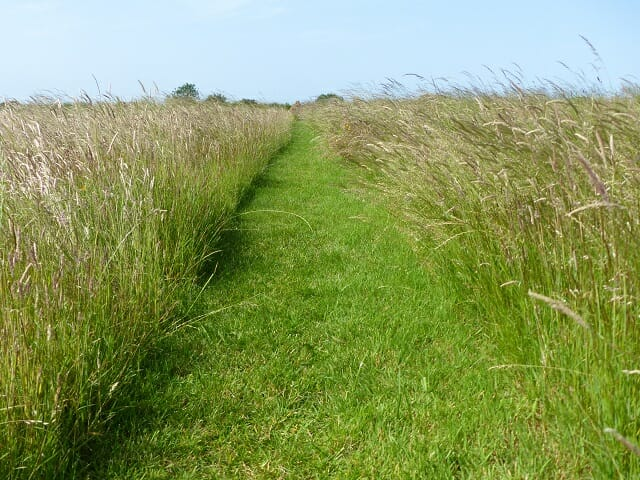 Path Mown Through Grassland